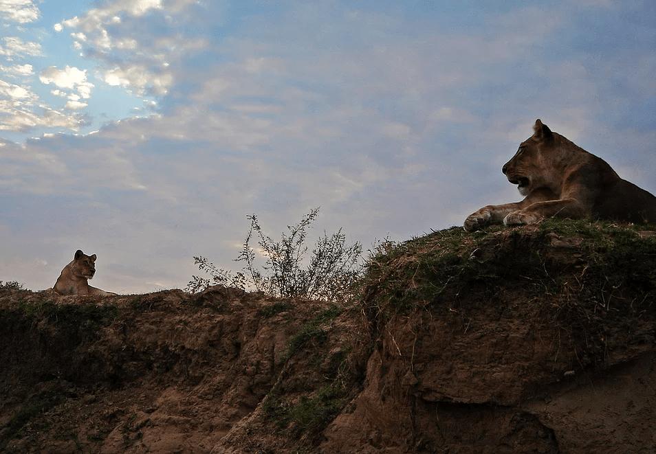Wild Zambia Safari