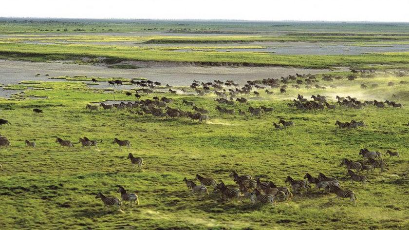 bucket-list African adventures, migration