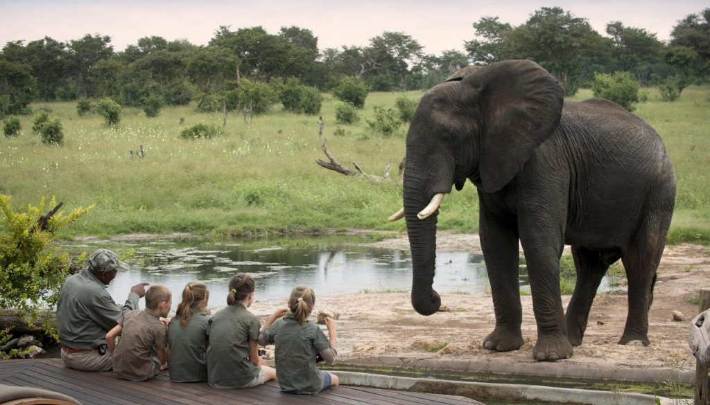 Elephants in Somalisa Acacia, Hwange