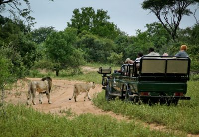 South Africa holiday, safari