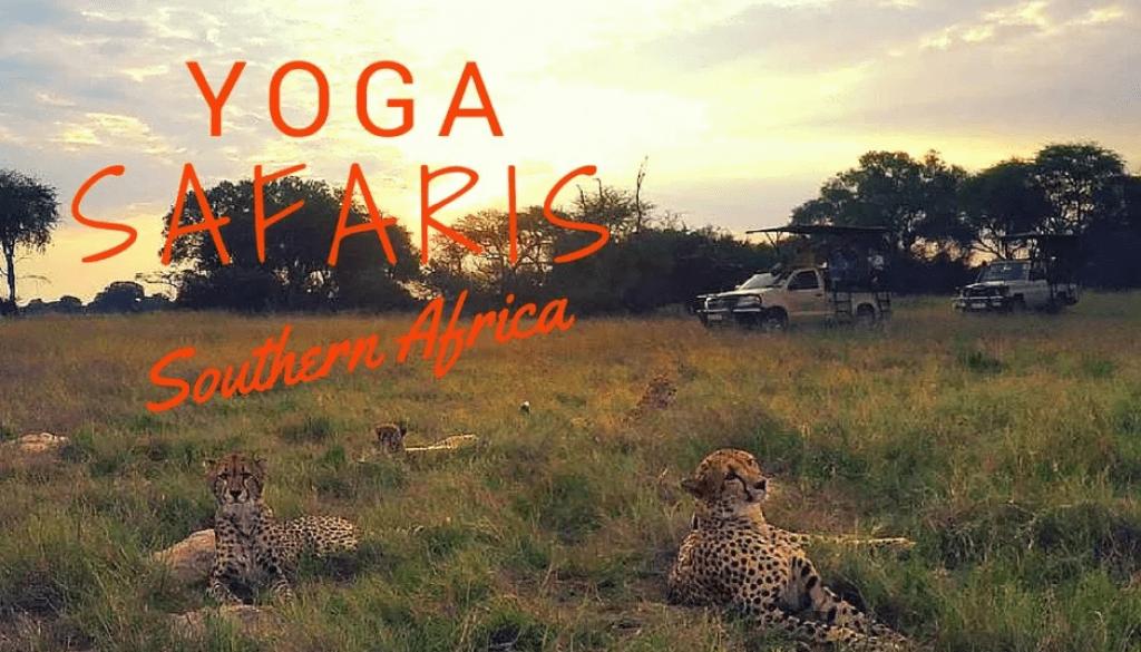 Cheetah in Hwange, Zimbabwe yoga safari