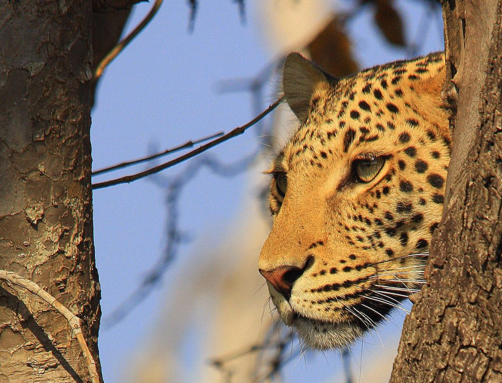 Botswana Highlights Camping Safari (11)