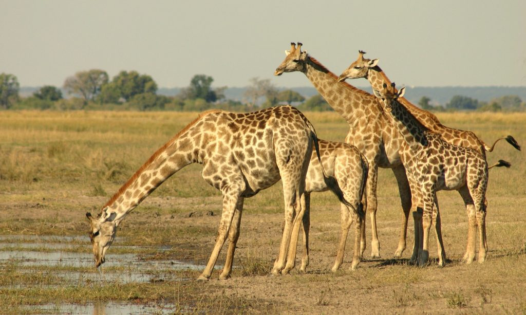 Botswana Highlights Camping Safari (2)