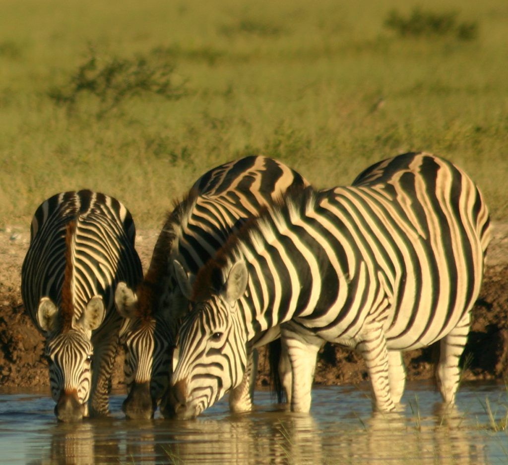 Botswana Highlights Camping Safari (9)