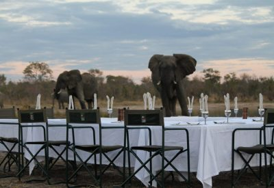 ZIMBABWE BIG FIVE YOGA SAFARI
