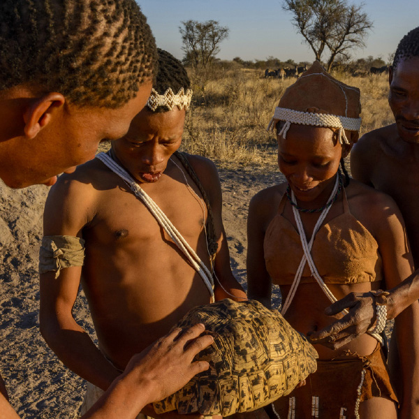 Bushman Interaction