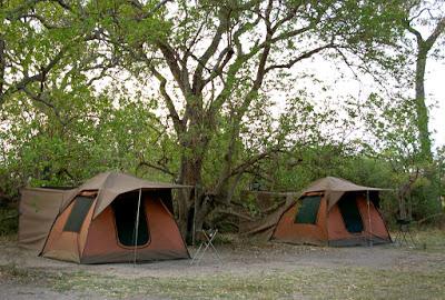 Camp Tents x2