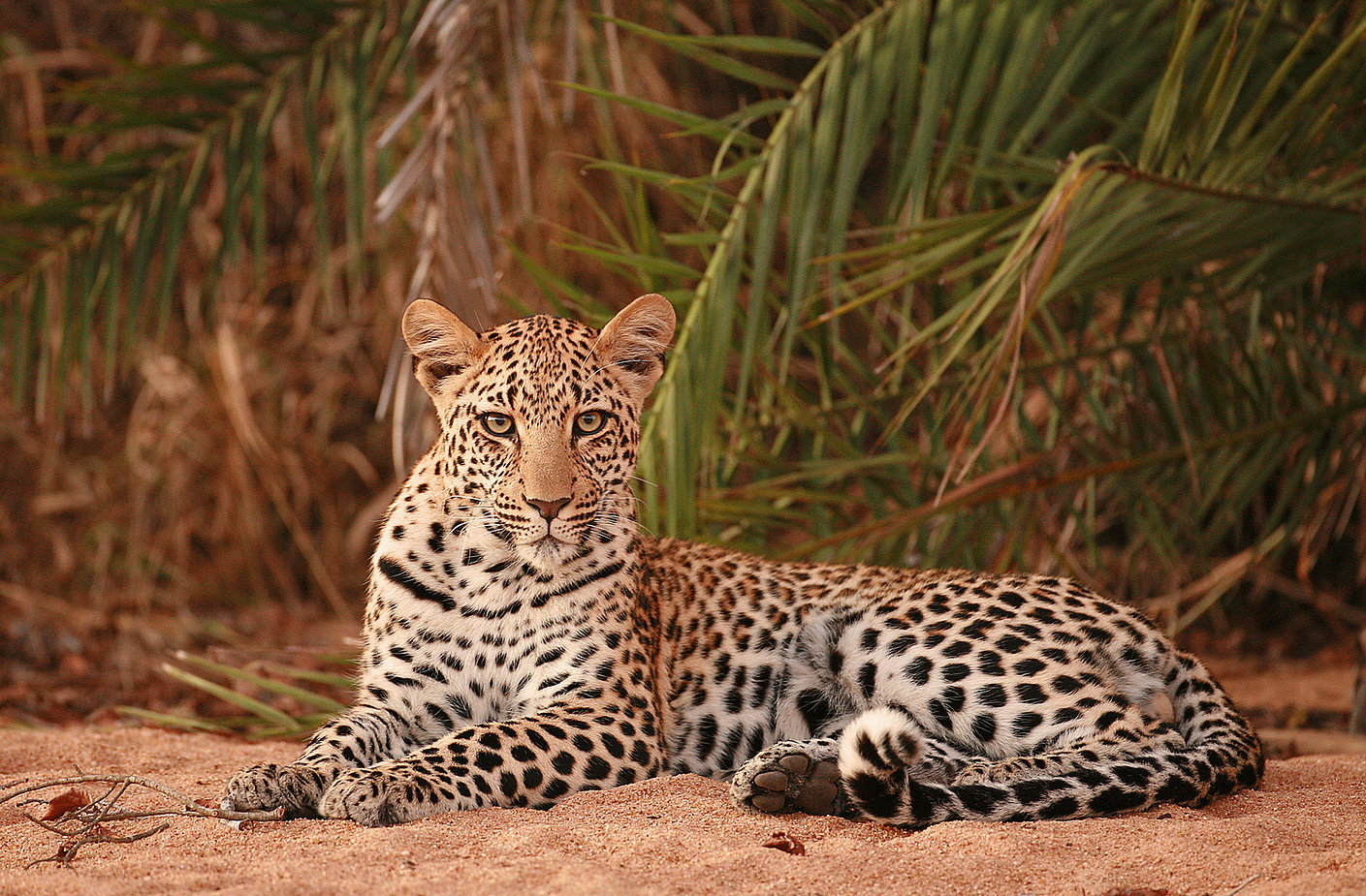 Leopard, Sabi Sands safari, South Africa