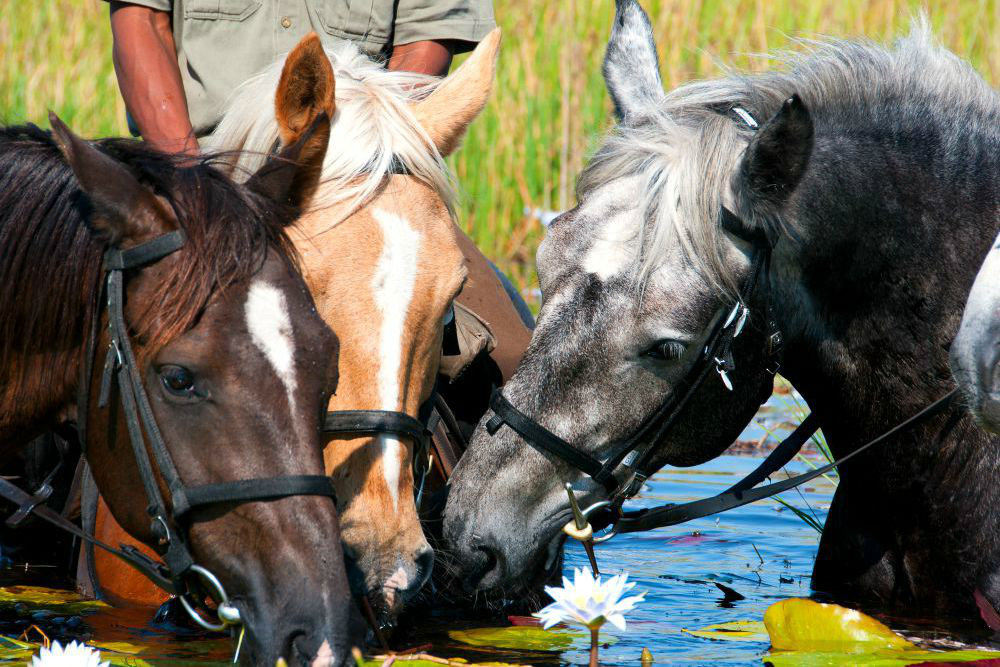 Horseback safari okavango delta botswana2