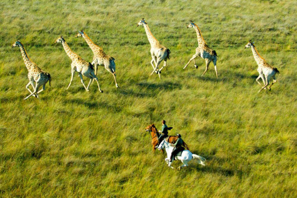 Horseback safari okavango delta botswana6