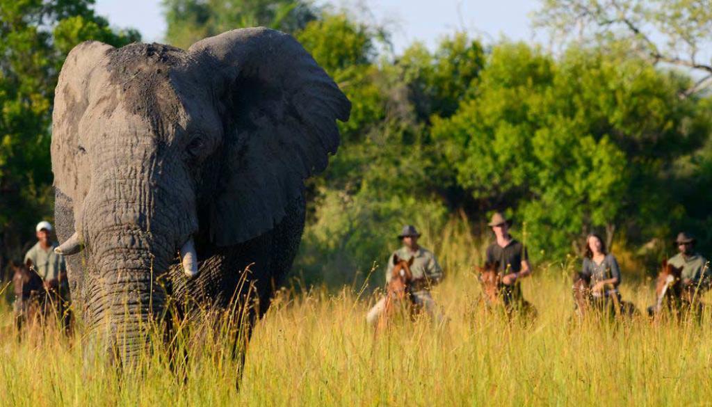 Horseback safari okavango delta botswana7