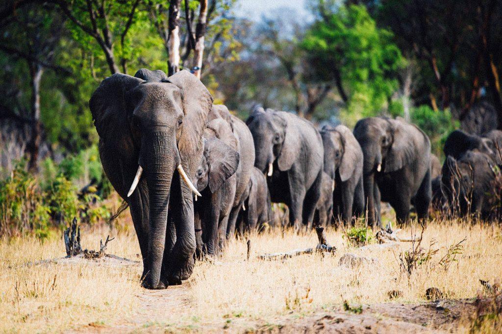 Hwange NP Elepahnts - Zimbabwe & Botswana Budget Lodge Safari