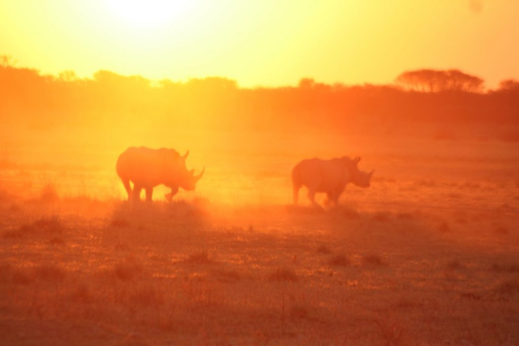 Khama Rhino Sanctuary - Zimbabwe & Botswana Budget Lodge Safari