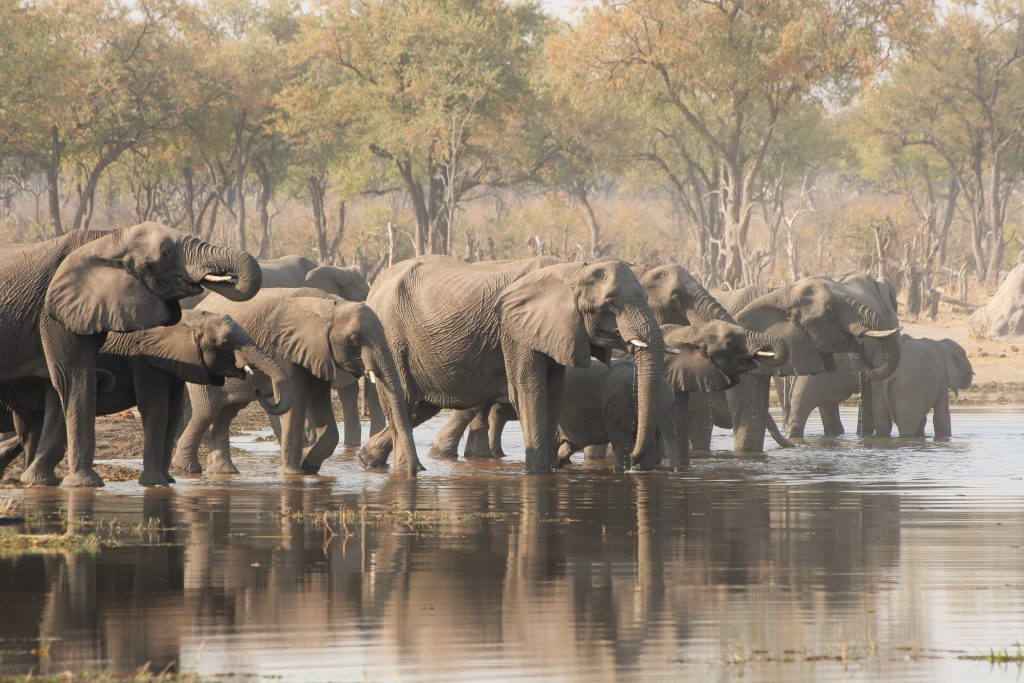 Made in Africa Tours - Botswana Budget Lodge Safari Moremi Elephant Herd