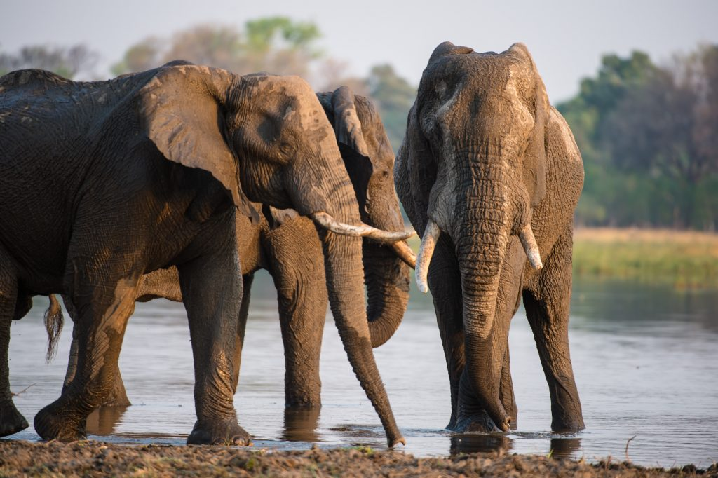 Made in Africa Tours - Botswana Camping Safari - Moremi Elephants
