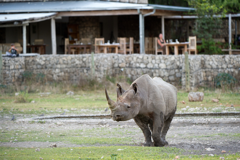 Made in Africa Tours - Namibia Exploration - Black Rhino