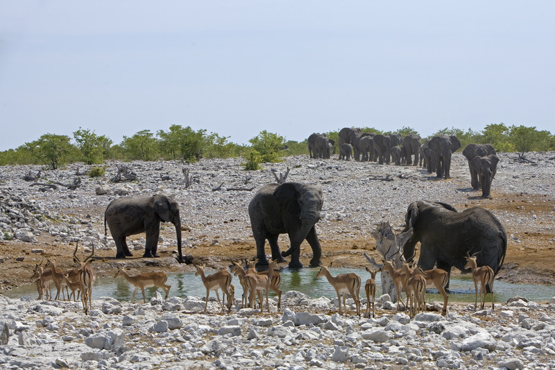Made in Africa Tours - Namibia Exploration - Etosha Elephants