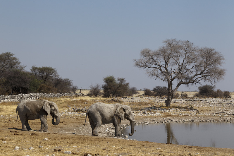 Made in Africa Tours - Namibia Exploration - Etosha Waterhole