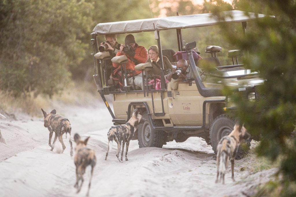 Made in Africa Tours & Safaris - Botswana Highlights Luxury Camping Safari - Wilddog view from vehicle