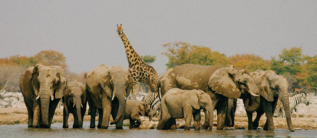 Made in Africa Tours & Safaris - Cape to Vic Falls Exploration - Etosha National Park, Waterhole