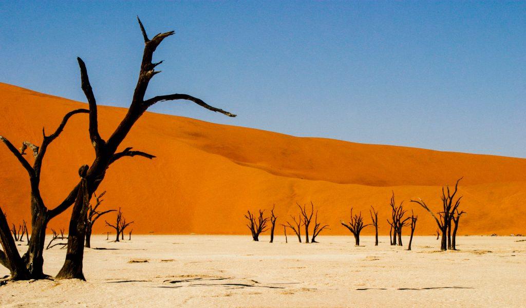 Made in Africa Tours & Safaris - Cape to Vic Falls Exploration - Namib Desert, Deadvlei