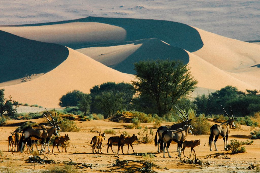 Made in Africa Tours & Safaris - Cape to Vic Falls Exploration - Namib Desert, Scenery