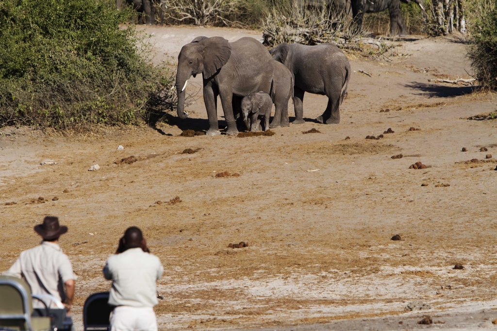 Made in Africa Tours & Safaris - Chobe River game viewing