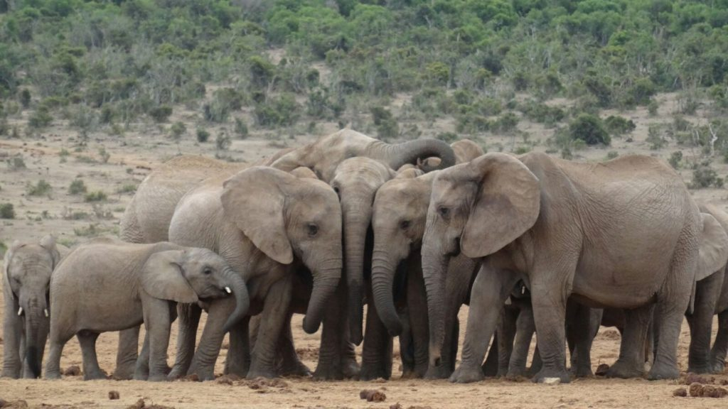 Made in Africa Tours & Safaris - Garden Route Self Drive Addo Elephants