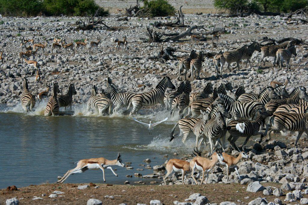 Made in Africa Tours & Safaris - Namibia & Botswana Circular Safari - Etosha Water Hole
