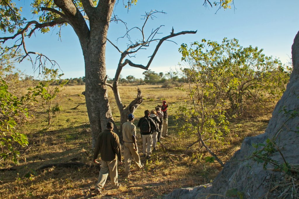 Made in Africa Tours & Safaris - Okavango Delta guided bush walk