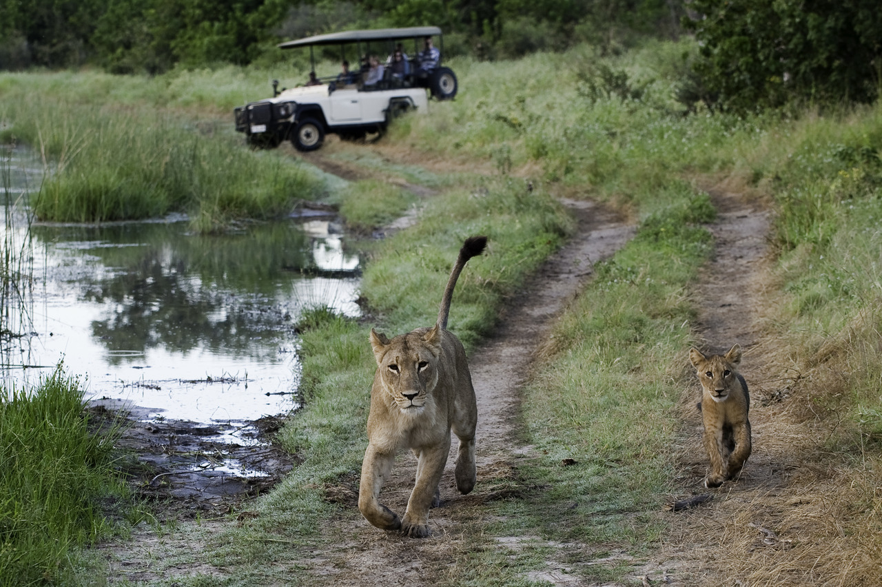 Botswana Family Safari