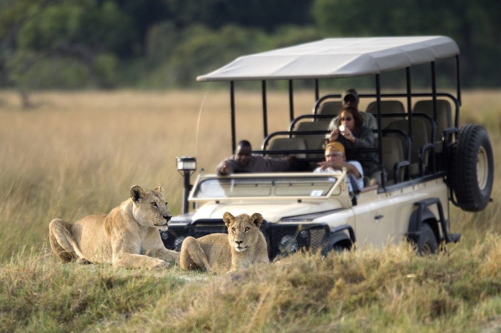 Made in Africa Tours & Safaris - Vumbura game drives with lions