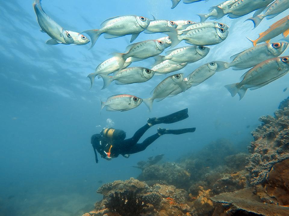Benguerra-Island-Scuba-Diving-1.jpg