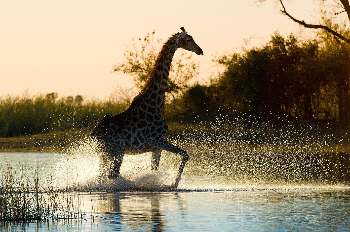 Okavango delta safari5