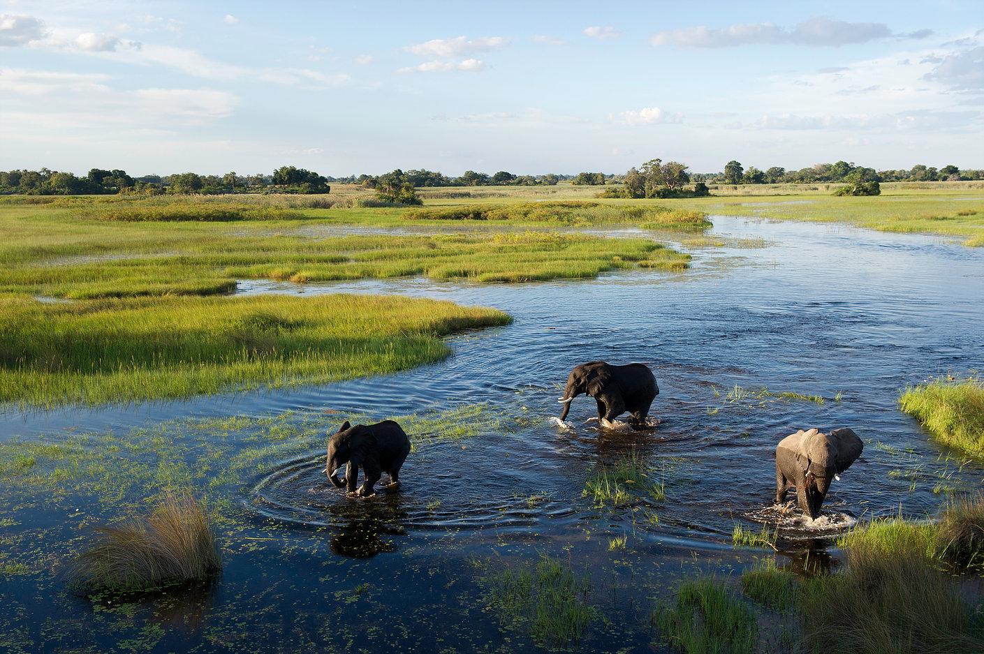 Okavango delta safari8