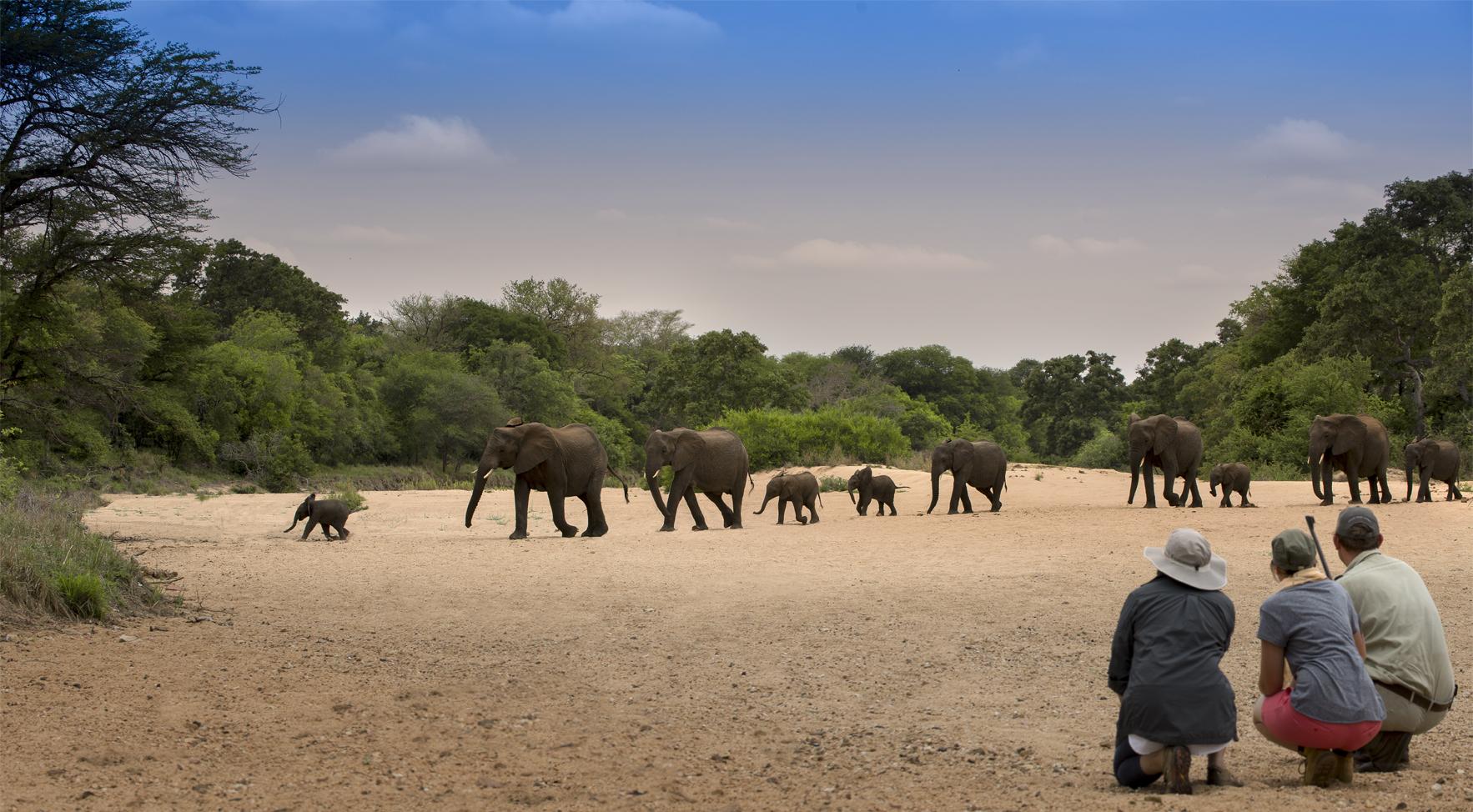 elaphants, south africa safari, kruger national park