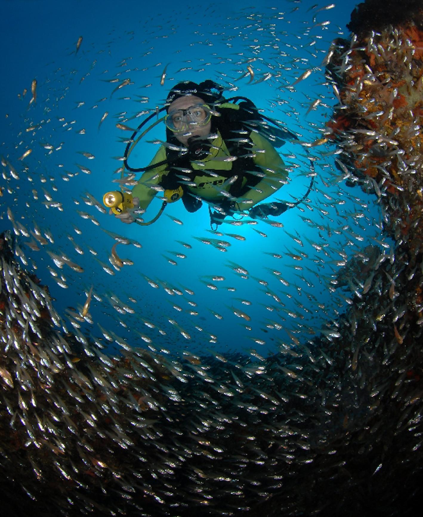 bucket-list African adventures, diving mozambique