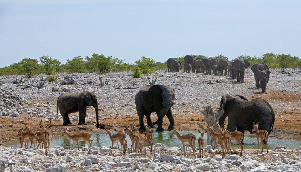 etosha national park safari