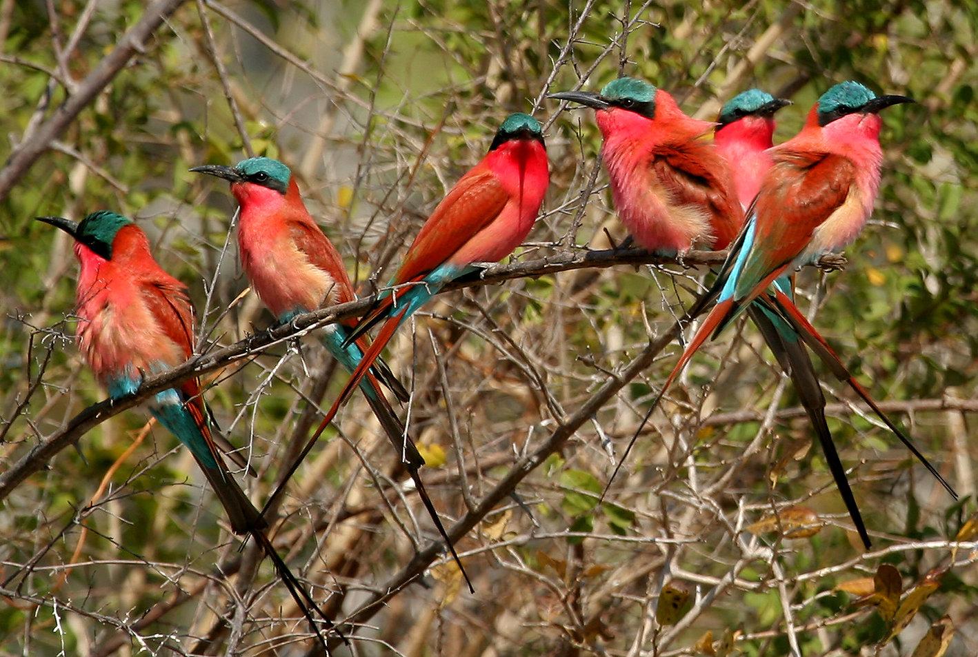 south luangwa safari3 zambia