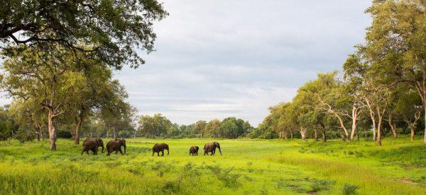 WILD ZAMBIA