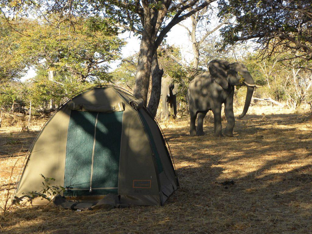 sunway_botswana_moremi_campsite_andrew_lindsay_dscn8134_20131031_1118315497
