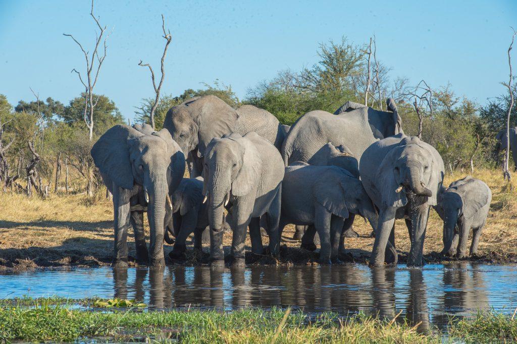 sunway_botswana_moremi_elephants_khwai_brucetaylor-9347_20131031_1611271759