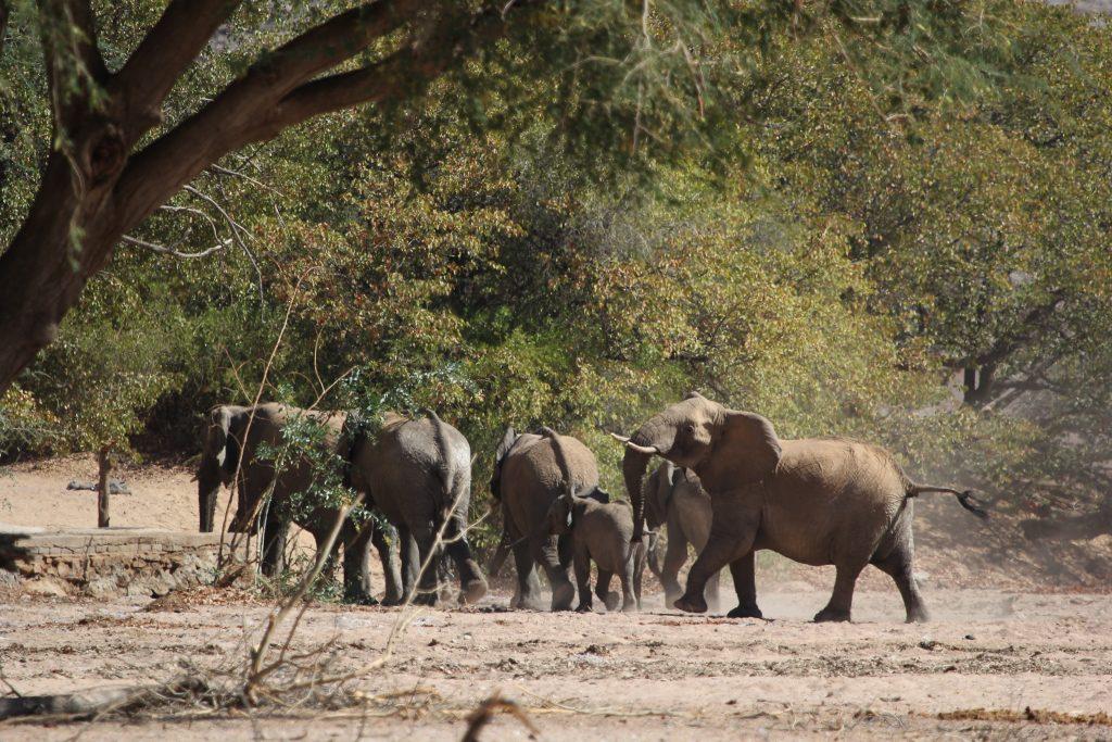 sunway_namibia_brandberg_elephants_cronje_rademan_img_0612_20171003_1689597721