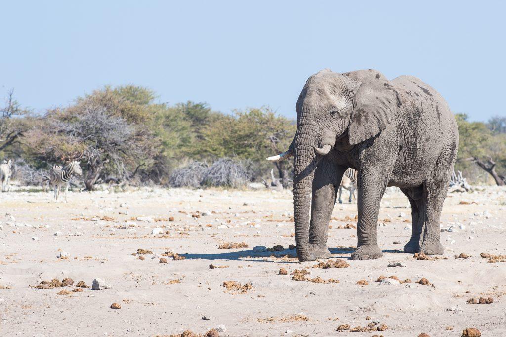 sunway_namibia_etosha_np_bruce_taylor-7469_20171003_1203676841