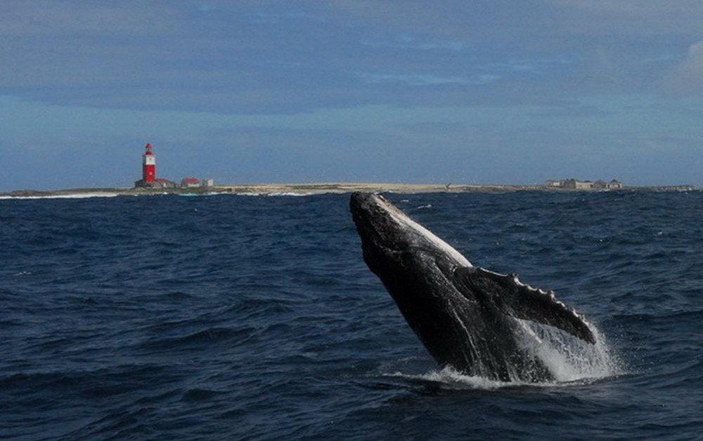 bucket-list African adventures, whale watching
