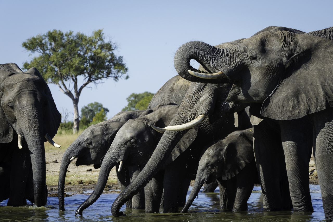 Hwange elephants Zimbabwe safari