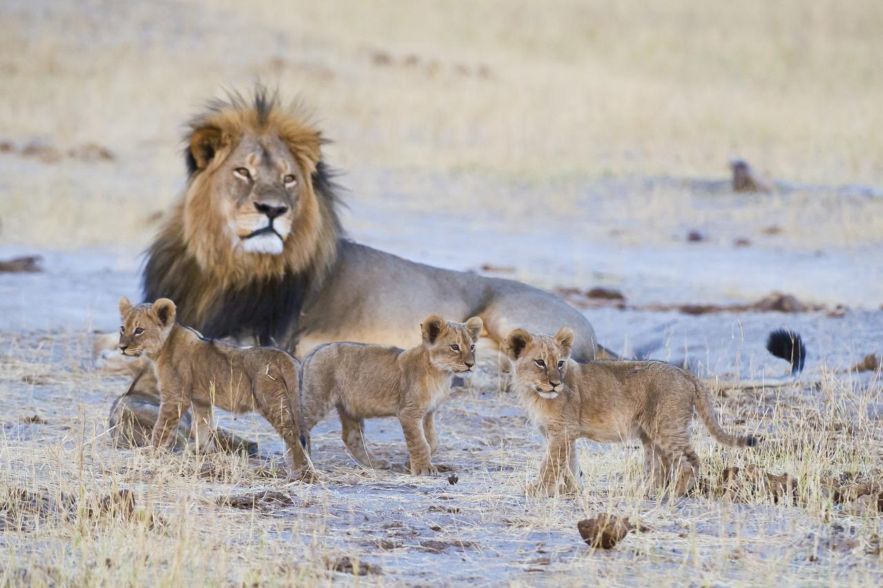 Zimbabwe lodge safari lions