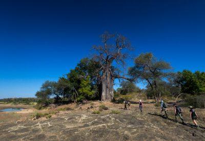 Pafuri walking safari Kruger National Park