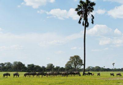 Botswana Okavango Delta wildebeest