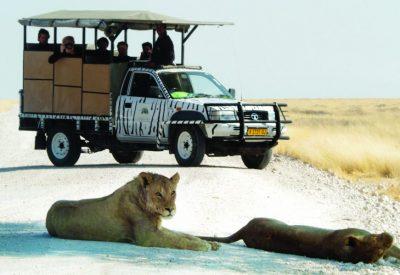 Etosha lion Namibia safari